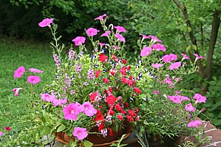 Patio_planter